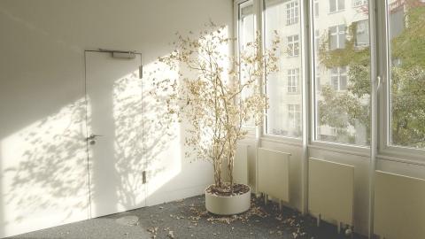 Can Carbon Monoxide Kill Houseplants?