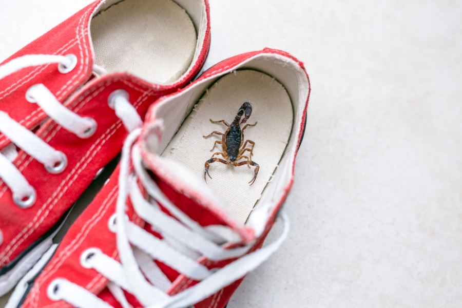 6 Ways To Deal With Scorpions Home
